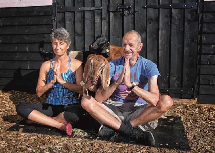 Arthur Smith tries goat yoga in Suffolk
