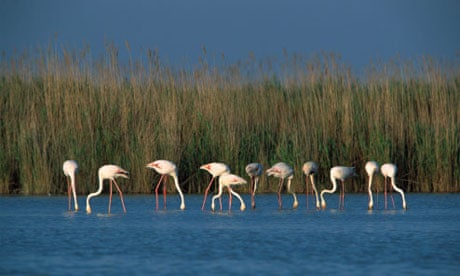 My travels: Camargue, southern France